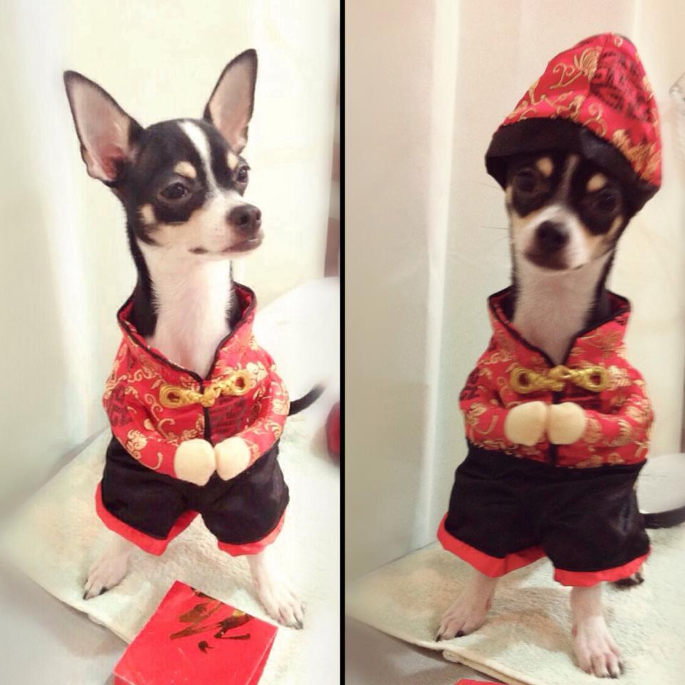 ชุดน้องหมาแฟนซีตรุษจีน สีแดง พร้อมส่ง