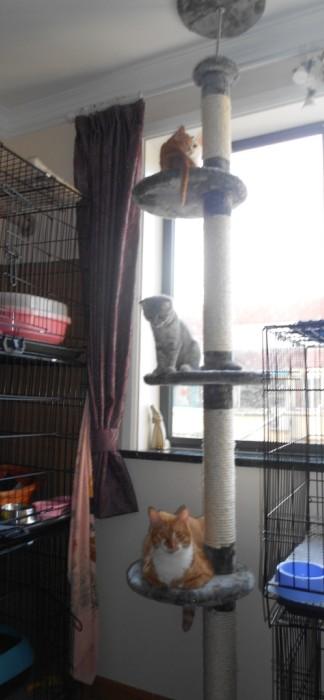MU0157 คอนโดแมว ยึดติดเพดาน ประหยัดพื้นที่