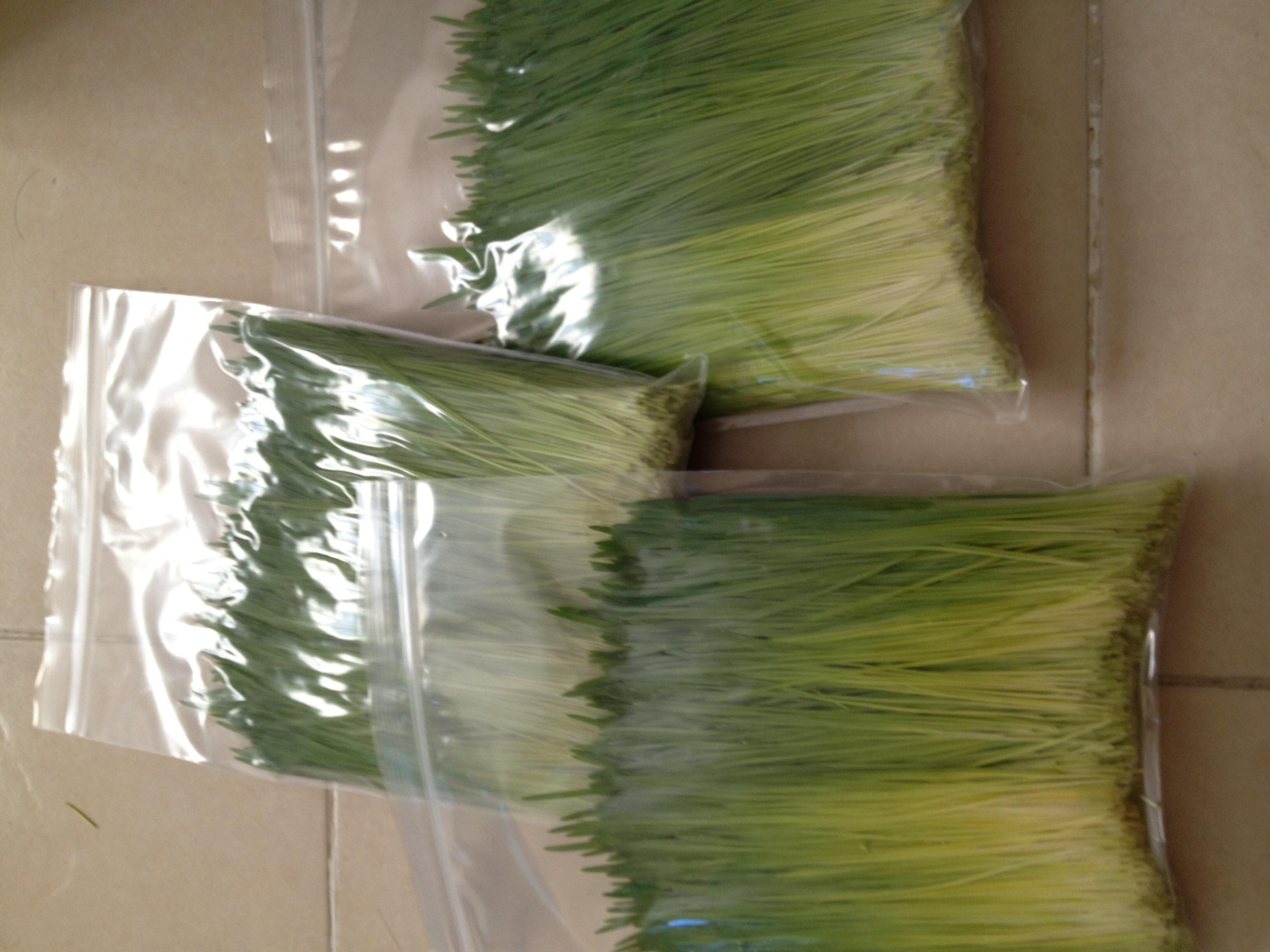 ต้นอ่อนข้าวสาลี ต้นอ่อนข้าวสาลีตัดสด Wheatgrass 1 Kg.