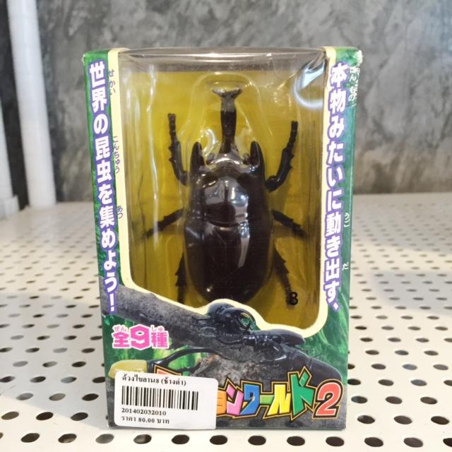 ด้วงไขลาน No. 8 ช้างดำ
