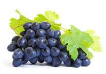 2. ผิวองุ่นแดง Grape Callus มีสารในกลุ่มโพลิฟีนอล เป็นสาร Anti-Oxidants ต้านอนุมูลอิสระที่ทรงพลังมาก เพิ่มความแข็งให้กับชั้นผิว ทำให้ผิวกระชับไม่หย่อนคล้อย