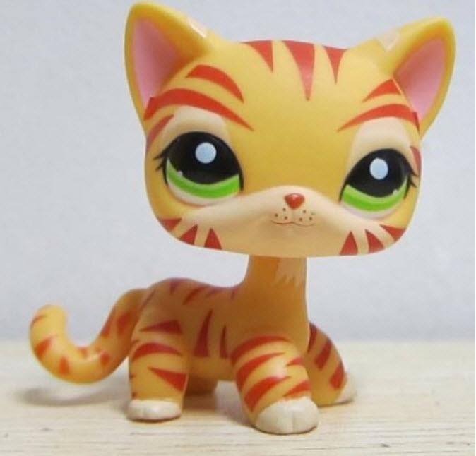 แมว สีส้มลายเสือ #1451 (หายาก)