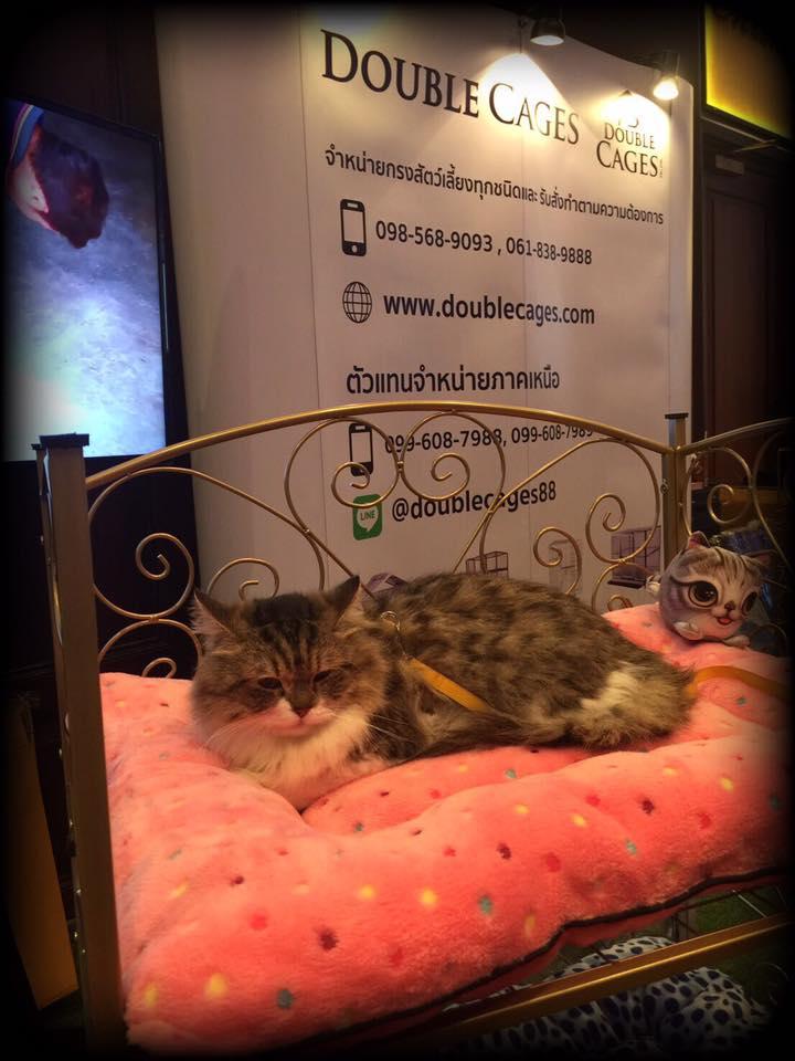 เตียงน้องแมว พร้อมฟูกเกรดเอ