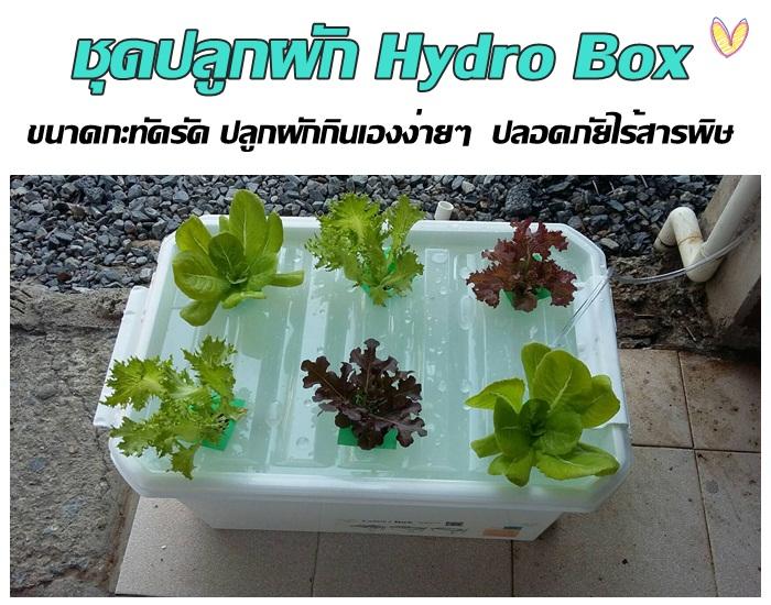 ชุดปลูกผัก Hydro Box