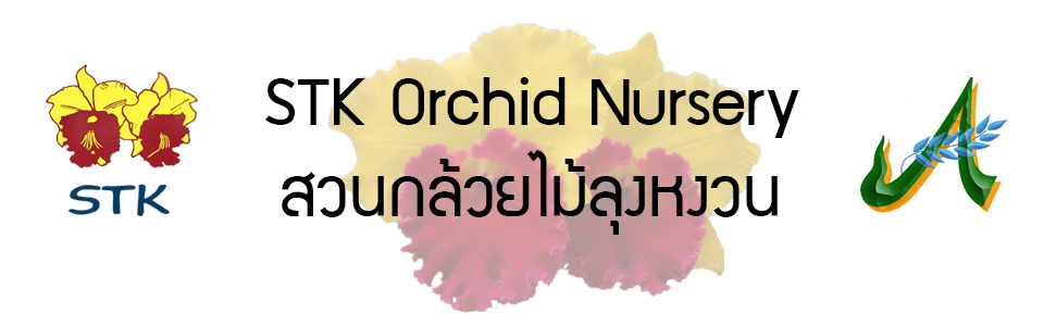 STK Orchid Nursery สวนกล้วยไม้ลุงหงวน