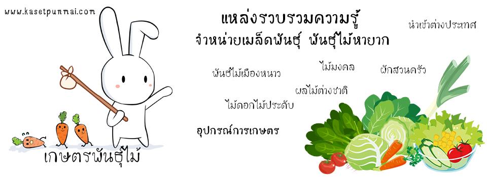 ขายเมล็ดพันธุ์ผัก เมล็ดพันธุ์ผลไม้ เมล็ดพันธุ์ดอกไม้ จากต่างประเทศ พร้อมวิธีปลูก